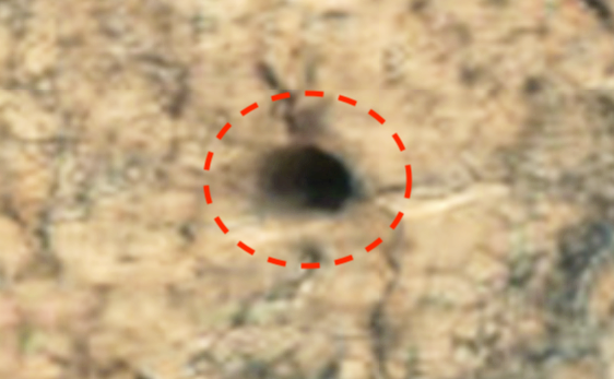 Giant Ancient Pyramid Found On Mars In HD Photo Eagle%252C%2Bnebula%252C%2Bfigure%252C%2Bgod%252C%2Bgodly%252C%2Bfairy%252C%2Baliens%252C%2Balien%252C%2BET%252C%2Bplanet%2Bx%252C%2Bpyramid%252C%2BMars%252C%2Bsecret%252C%2Bwtf%252C%2BUFO%252C%2Bsighting%252C%2Bevidence%252C%2B3%2Bcopy4