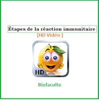 Étapes de la réaction immunitaire