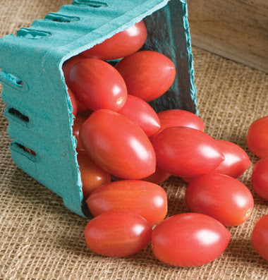 Franklin County Pa Gardeners 2011 Tomato Day Results