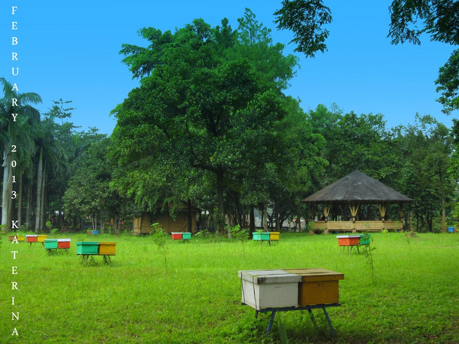 Berburu Madu Di Taman Wisata Lebah Madu Pramuka Cibubur