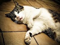 Cara Mengubur Kucing Menurut Islam