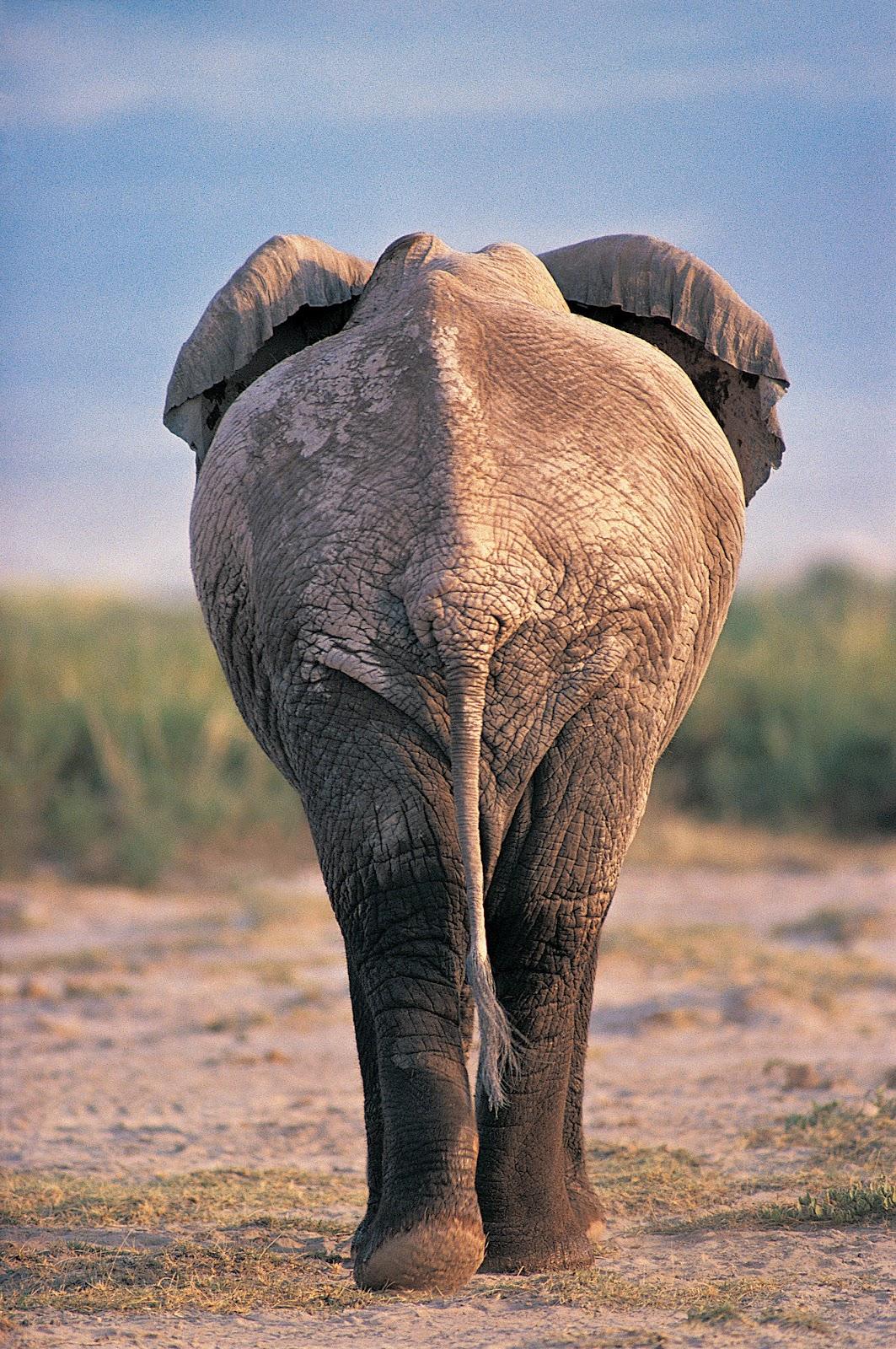 An Elephant a Day: Elephant No. 207: Ballpoint Pen  An Elephant a D...