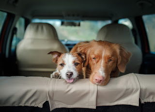 Prepare Your Pet for Car Trips