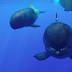 Whale gives a smile when camera zoomed in to take the video