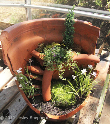 A creative use for an old flower pot! - Ayegardening Ltd