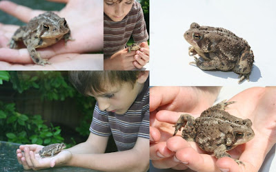 Boy with frog :: All Pretty Things