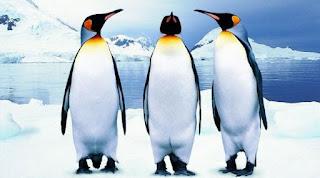 Fakta Unik Mengenai Penguin Yuk Cari Tahu disini