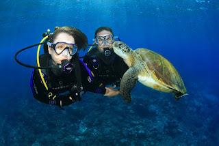 11 Tempat Menyelam Terbaik Dunia