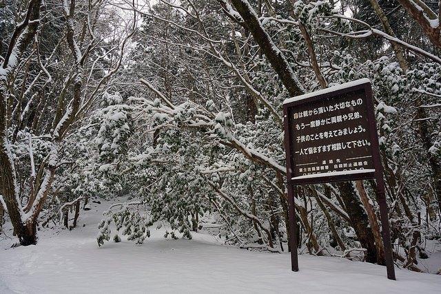 Tanda Larangan Masuk ke Hutan Aokigahara