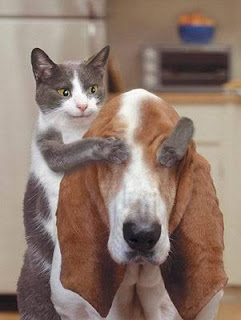 surprise, cat and dog