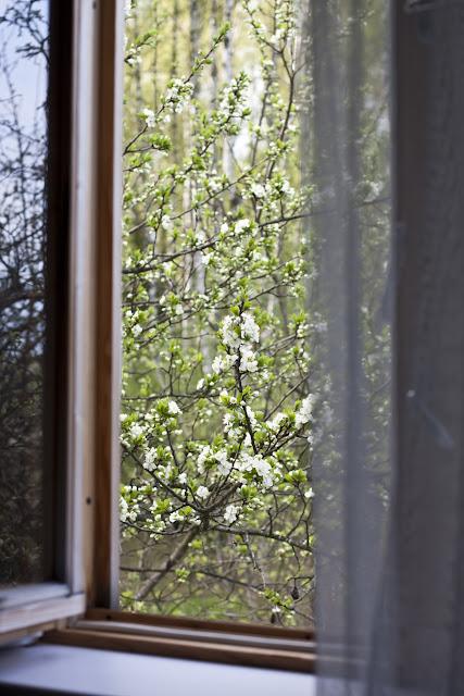 вид из окна в мае