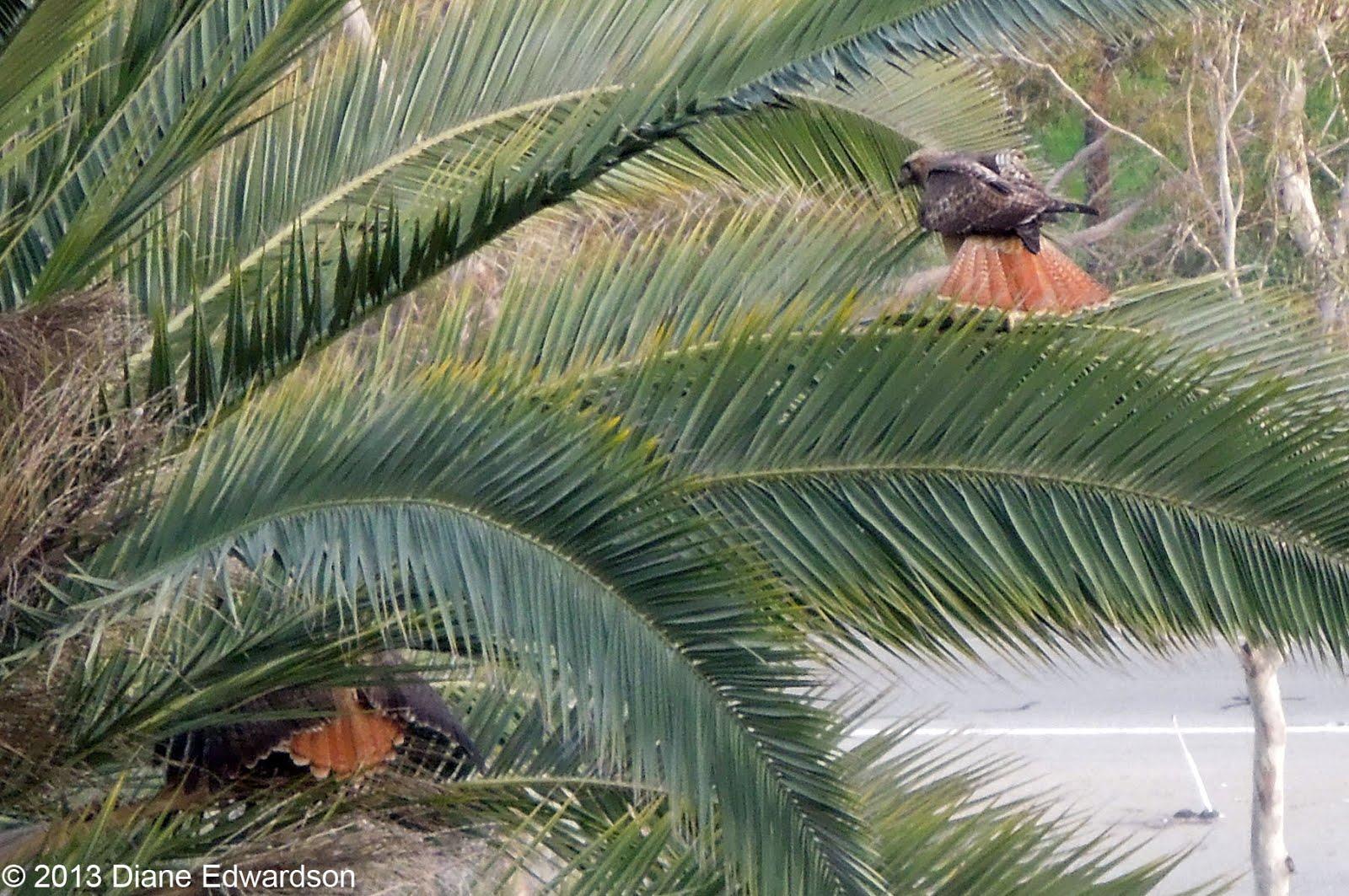 corralitas red car property corralitas drive red tailed hawk