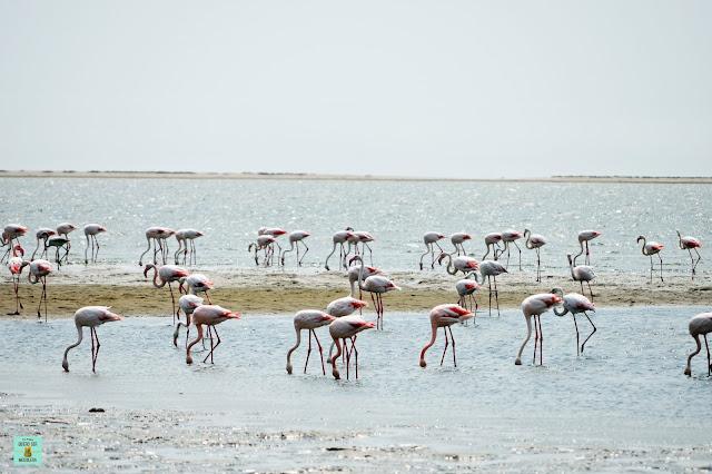 Laguna de Walvis Bay, Namibia