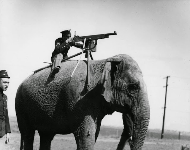 Publicity picture. American corporal aims a Colt M1895 atop a Sri Lankan elephant. 1914. Impossible Wars. marchmatron.com