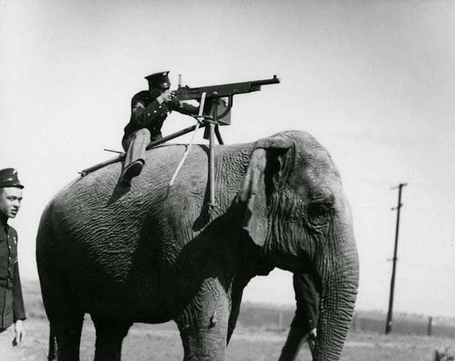 Publicity picture. American corporal aims a Colt M1895 atop a Sri Lankan elephant. 1914. Impossible Wars. marchmatron.com