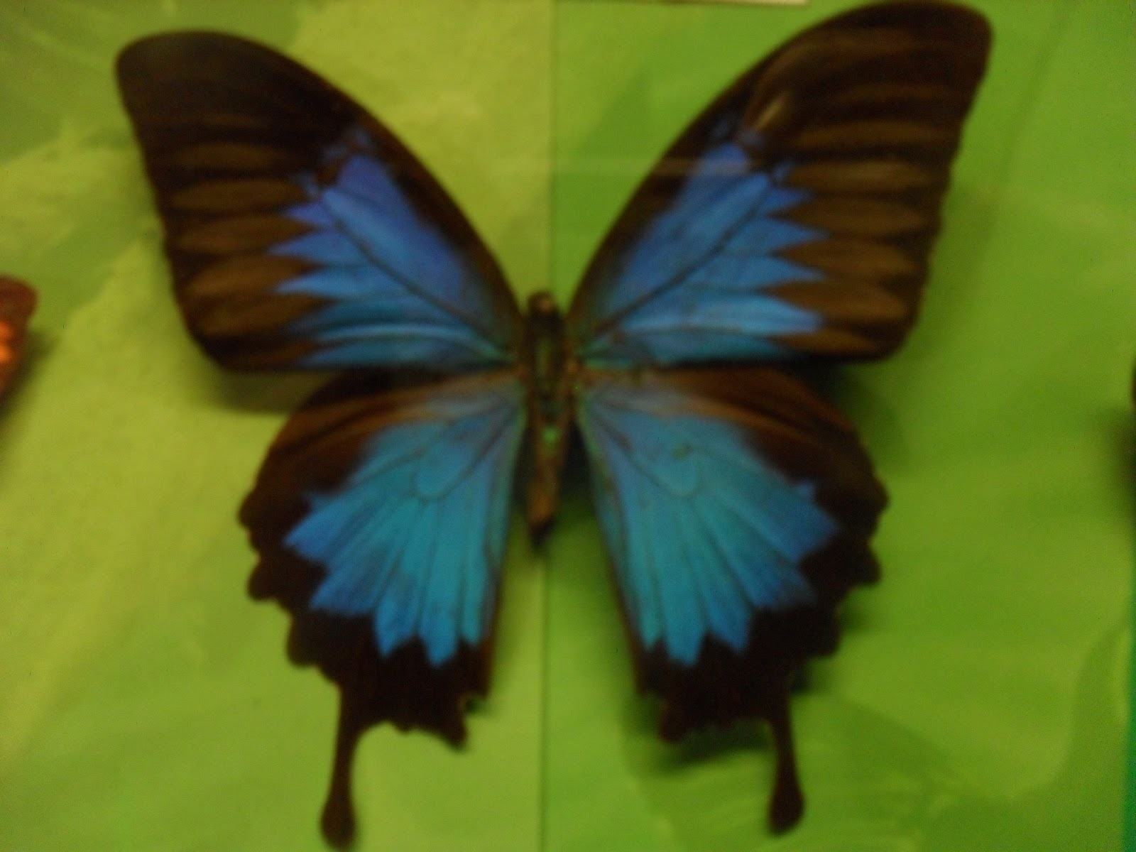 PRASEKOLAH SERI BEROLEH TEMA serangga