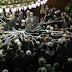 Menzil Cemaati - Sofilerin ibretlik halleri