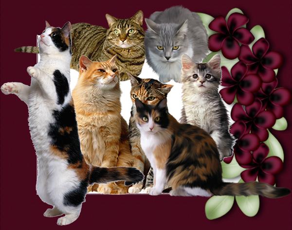 Gatomania Frases De Gatos