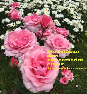mutluluk sözleri, mutluluk mesajları, mutluluk ile ilgili sözler, dünya mutlulu günü, 20 mart mutluluk günü, nasıl mutlu olunur, mutluluk nedir, altın sözler,