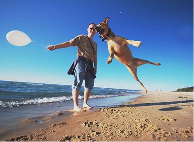 Imagen de perro saltando