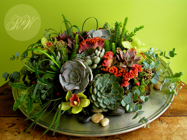 Robin Wood Flowers: Succulents Come Indoors