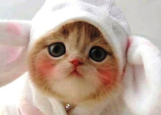 Benarkah Memelihara Kucing Dapat Menyebabkan Kemandulan dan Sulit Hamil?