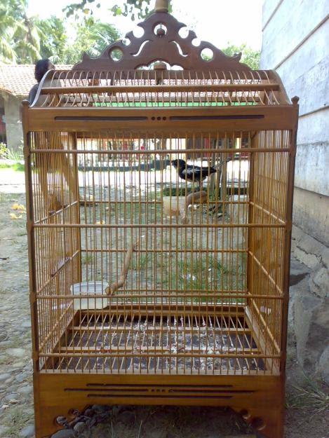 Kurungan Manuk: Sangkar Burung Jenis Kosan