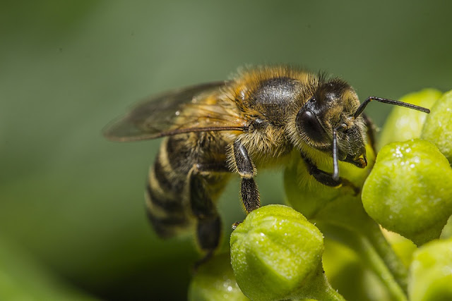 Home Remedies for Bee Stings, How to Treat Bee Stings, bee sting relief fast,