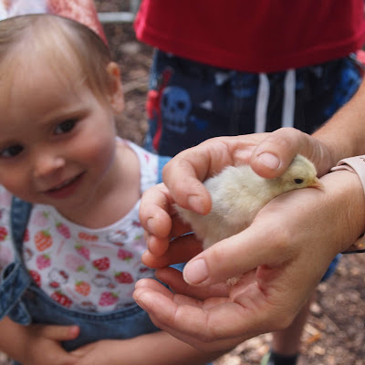 Lottie meeting a chick
