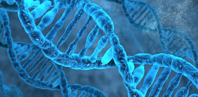 Scientists Just Observed Epigenetic Memories Being Passed Down for 14 Generations