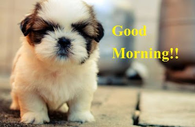 Puppy Good Morning Images - Cute Puppy Image for Good Morning wishes
