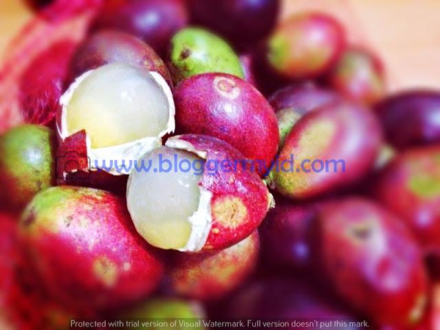 Berbagai manfaat buah matoa yang bisa kita nikmati khasiatnya yaitu :  1. Melancarkan Sistem Pencernaan  Kesehatan pencernaan adalah yang paling utama. Sebab pencernaan yang sehat akan menentukan bagaimana kondisi organ kita lainnya.  Makanan yang dikonsumsi akan dicerna oleh organ-organ di perut kemudian dibuang dalam bentuk feses. Dan sisa atau nutrisi yang diserap dari makanan akan disebarkan ke seluruh anggota tubuh melalui pembuluh darah.  Salah satu manfaat yang bisa kita dapatkan dari buah matoa adalah kandungan seratnya. Kandungan serat dalam buah matoa akan menjaga serta melancarkan sistem pencernaan kita. Serat akan menjaga pencernaan kita tetap stabil.  Oleh sebab itu mengonsumsi serat secara rutin sangat baik untuk tubuh kita, salah satunya adalah buah matoa.  2. Sebagai Antioksidan  Antioksidan adalah zat yang sangat diperlukan tubuh untuk menangkal berbagai serangan penyakit. Tubuh kita membutuhkan asupan antioksidan yang cukup supaya kondisi imun tubuh tetap stabil. Salah satu sumber makanan yang kaya akan antioksidan adalah buah matoa.  Manfaat buah matoa yang tinggi kandungannya akan antioksidan bisa dirasakan setelah Anda mengonsumsinya.  Antioksidan ini akan menangkal segala radikal bebas, mencegah kanker, mencegah peradangan, dan berbagai penyakit lainnya.  3. Mencegah Tekanan Darah Tinggi atau Hipertensi  Tekanan darah yang tidak stabil atau darah tinggi adalah suatu penyakit yang tidak boleh disepelekan. Pada tahap yang parah, tekanan darah tinggi bisa menyebabkan stress, stroke, lumpuh, dan serangan jantung. Setiap orang tentunya sangat takut dengan akibat dari hipertensi tersebut.  Oleh sebab itu, hipertensi atau tekanan darah tinggi harus diobati ataupun dicegah. Salah satu cara untuk mencegahnya adalah dengan mengonsumsi buah matoa.  Buah ini dipercaya mampu menurunkan tekanan darah tinggi dan menstabilkan keadaan darah agar tetap normal.  4. Sebagai Sumber Tenaga  Buah matoa mengandung glukosa yang mampu memberikan energi pada tubuh kita. 
