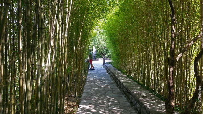 Бамбуковая роща в Чатовича Млини