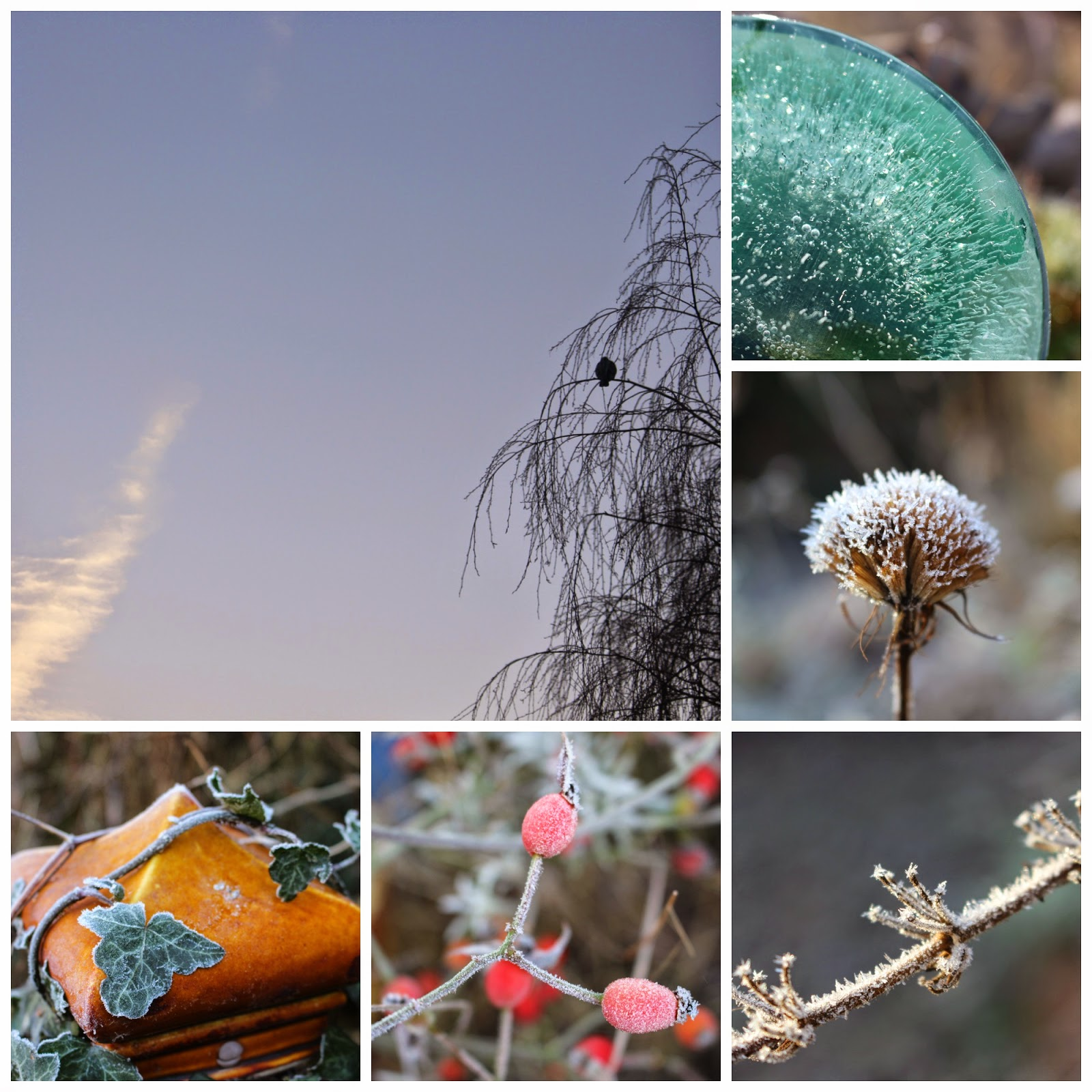Collage of hoar frost in my garden, January 2015