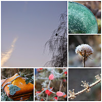 Photo collage of hoar frost photos