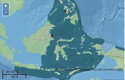 10 Karang Acropora Endemik Indonesia