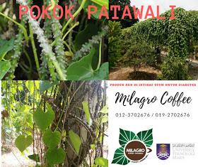 MILAGRO COFFEE PATAWALI - KOPI EKSTRAK PATAWALI Nombor 1 di Malaysia dan di Dunia