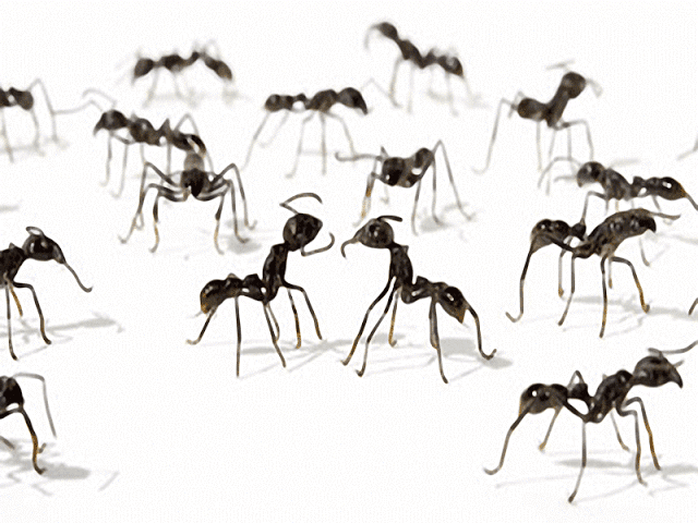 Interpretación de soñar con hormigas