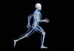 Tulang-manusia