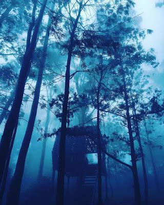 Хатина на дереві
