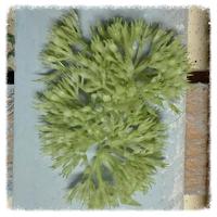http://www.foamiran.pl/pl/c/Preciki-i-srodki-do-kwiatow/14