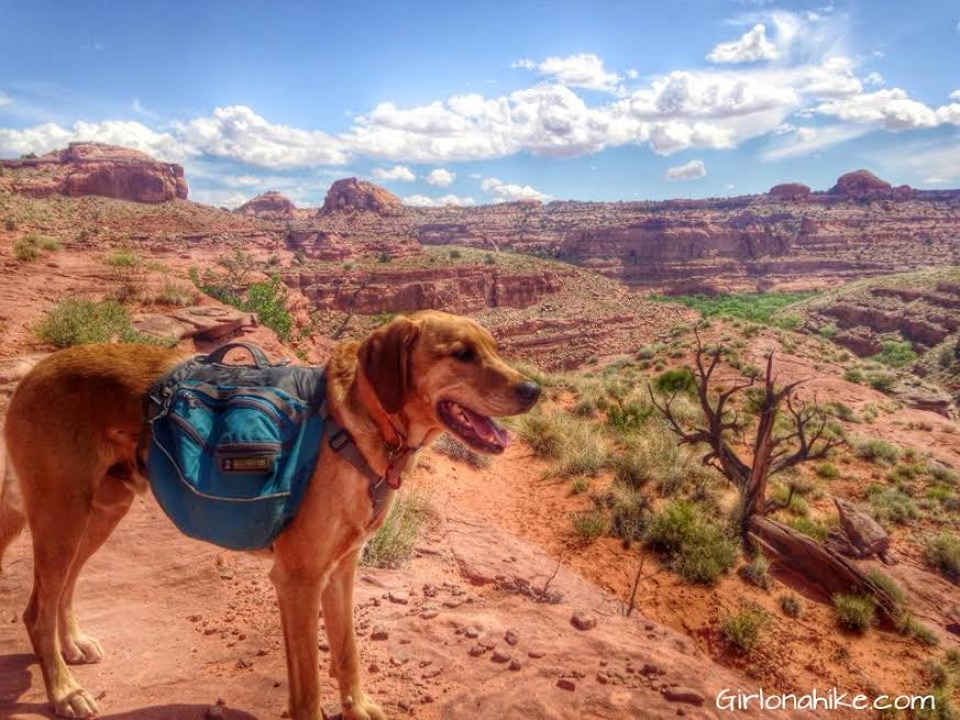 Girl on a Hike: Backpacking with Dogs