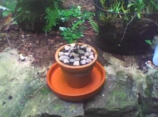 Plantasemminiaturasbonsai Aprenda A Tecnica Do Bonsai