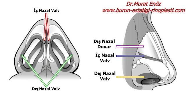 Nazal Valv Bölgesi Anatomisi - İç Nazal Valv - Dış Nazal Valv