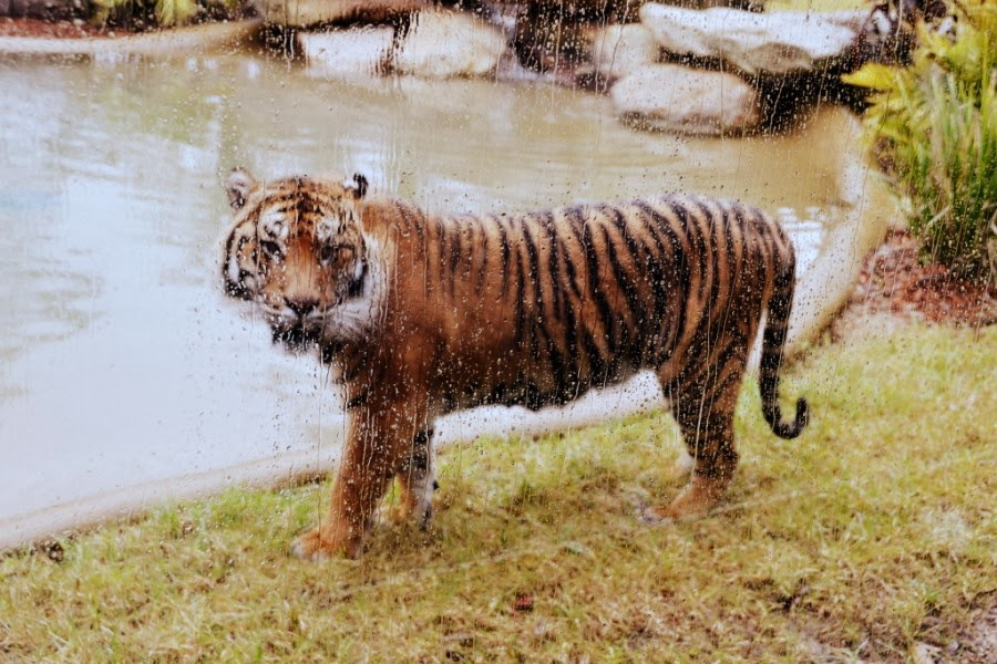 Animals Who Really Don't Know How to Enjoy Rain
