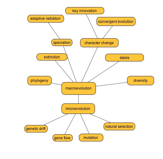 Mutation Concept Map.Princess Tradescantia Teaching With Concept Maps