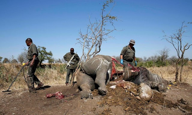 Revealed: The Criminals Making Millions From Illegal Wildlife Trafficking