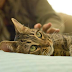 Tips The Basics of Cat Health Care Very Good