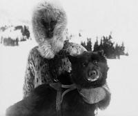 cachorro informativo balto husky