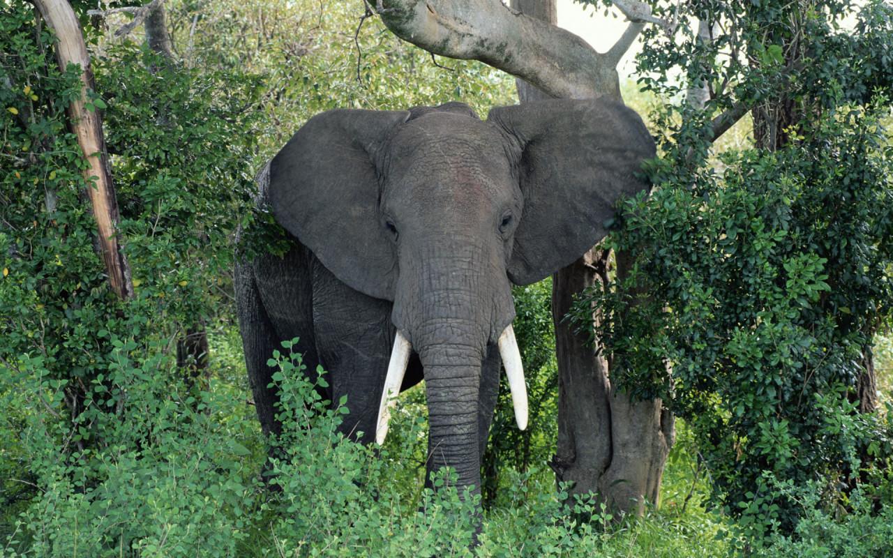 elephant african animals birds dangerous wallpapers